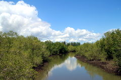 Mangrove forest, huahin, canal Stock Image