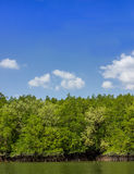 Mangrove forest1. Mangrove forest insouthern thailand and blue sky Royalty Free Stock Photography