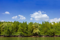 Mangrove forest1. Mangrove forest insouthern thailand and blue sky Stock Images