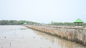 Mangrove forest or Intertidal forest at Bangkhunthein in Bangkok Thailand. Mangroves are various large and extensive types of trees up to medium height and stock video