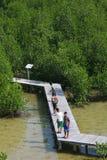 Mangrove Royalty Free Stock Photo