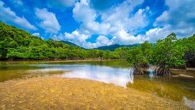Mangrove forest. A mangrove forest in island of paradise of Ishigaki, Okinawa Japan stock photo