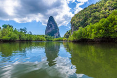 Mangrove forest Krabi Royalty Free Stock Photography
