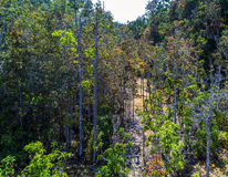 Mangrove forest at Krabi in Thailand Royalty Free Stock Photography