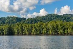 Mangrove Forest Landscape, Costa Rica arkivfoto