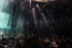 Mangrove Forest and Light Beams in Raja Ampat Stock Photography