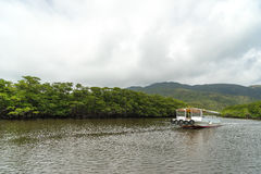 Mangrove Forest of Nakama River Stock Photography