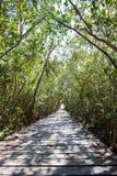 Mangrove Forest Natural Trail bei Laem Phak Bia, Pethaburi-Provinz, Thailand Lizenzfreie Stockbilder