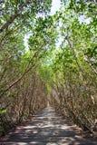 Mangrove Forest Natural Trail bei Laem Phak Bia, Pethaburi-Provinz, Thailand Stockfotos