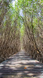 Mangrove Forest Natural Trail bei Laem Phak Bia, Pethaburi-Provinz, Thailand Lizenzfreie Stockfotos