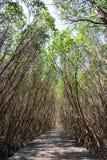 Mangrove Forest Natural Trail bei Laem Phak Bia, Pethaburi-Provinz, Thailand Stockbilder
