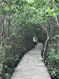 Mangrove forest nature trail in Thailand. stock photos
