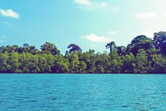 Mangrove forest next to the sea with blue sky. Andaman and Nicobar Islands stock image