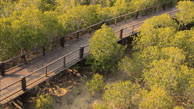 Mangrove forest park on daylight stock video