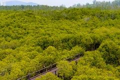 Mangrove forest at Pranburi Forest National Park, Prachuap Khiri Khan, Thailand Royalty Free Stock Image