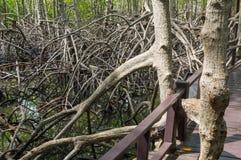 Mangrove forest at Pranburi Forest National Park, Prachuap Khiri Khan, Thailand Stock Images