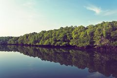 Mangrove forest prevent coastline corrosion in hailand. Channel. River channel through mangrove thickets. Andaman and Nicobar Islands India royalty free stock photos