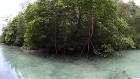 Mangrove Forest in Raja Ampat stock video