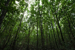 The mangrove forest Stock Image