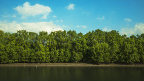 Mangrove forest. Forest at the river estuary at Ranong Thailand royalty free stock images