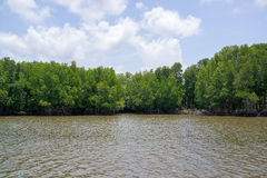 Mangrove forest and the river next to the sea. Green mangrove forest and the river next to the sea in Chantaburi, Thailand Royalty Free Stock Image