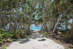 Mangroves: Path to Mystery Island Beach. Mangrove forest with sandy bath to remote Pacific Ocean beach on a sunny day at Mystery Island, Vanuatu Royalty Free Stock Image