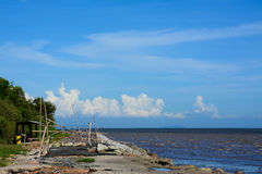 Mangrove forest  and  sea  in Bangpu , Thailand Royalty Free Stock Images