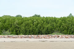 Mangrove forest in sea shore aerial roots at Phetchaburi ,the Gu Royalty Free Stock Image