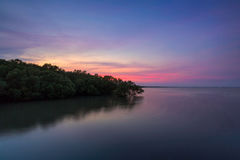 Mangrove forest on sea in Thailand Stock Images