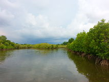 Mangrove forest. Sea tree thailand stock photos