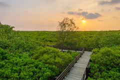 Mangrove forest by the sunset Stock Photo