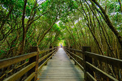 Mangrove forest by the sunset Stock Photos