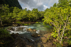 Mangrove Forest at Tha Pom ,Krabi Thailand Stock Image