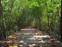 Mangrove forest. In Thailand Stock Photo