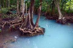Mangrove forest. In Thailand, Krabi stock photo