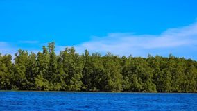 Mangrove Forest in Thailand Stock Photography