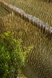 Mangrove forest top view Royalty Free Stock Photo