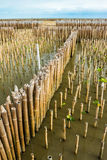 Mangrove forest top view Stock Photo