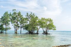 Mangrove forest in the tropical place. Beautiful wildlife scenery. Clear blue turquoise water, clear beach cloudy sky. Andaman and Nicobar islands. long island royalty free stock photos