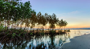Mangrove forest on twilight time Stock Photography