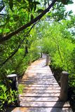 Mangrove forest walkway jungle mexico Royalty Free Stock Photography