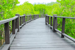 Mangrove forest walkway royalty free stock photography