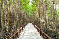 Mangrove forest walkway Stock Photography