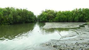 Mangrove forest with white birds flying and water pollution. Plastic waste from household stock footage