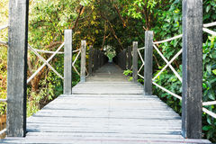 Mangrove forest with wood Walk way Stock Image