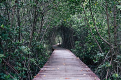 Mangrove forest with wood walkway bridge and leaves of tree.Phetchaburi ,Thailand. Royalty Free Stock Images