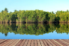 Mangrove forest Royalty Free Stock Photos
