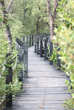 Mangrove forest wooden walkway. Royalty Free Stock Image