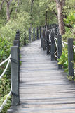 Mangrove forest wooden walkway. Stock Image
