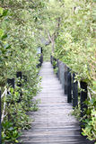 Mangrove forest wooden walkway. Stock Photo